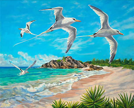 'Bermuda Longtails'