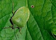 2012 - Manejo de plagas en el cultivo de