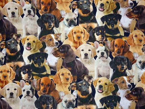 Hund Digitaldruck Hunde Baumwolle Meterware Webware