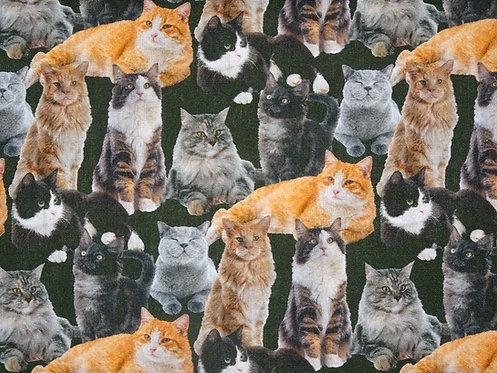 Katzen Digitaldruck Katze  Real Baumwolle Meterware Webware