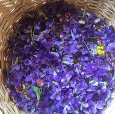 Abondance de violettes