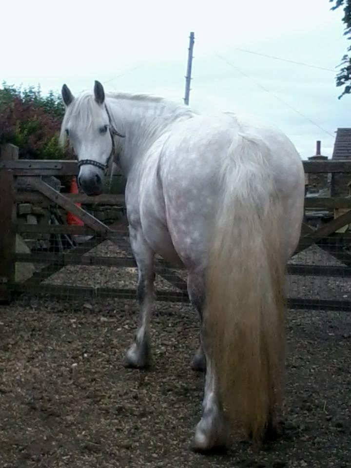 Heald Town Highland Ponies