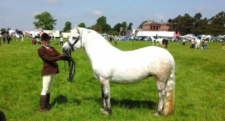 Highland Pony Stud