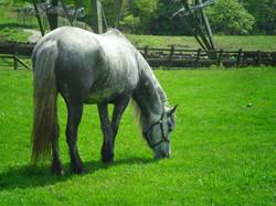 Heald town ponies