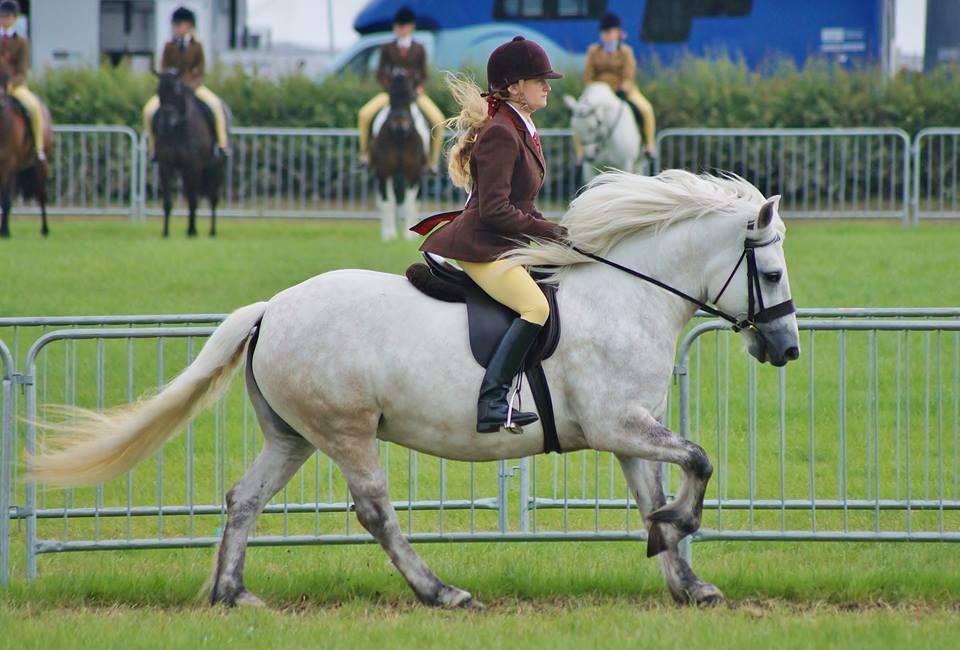 Highland Pony Styd