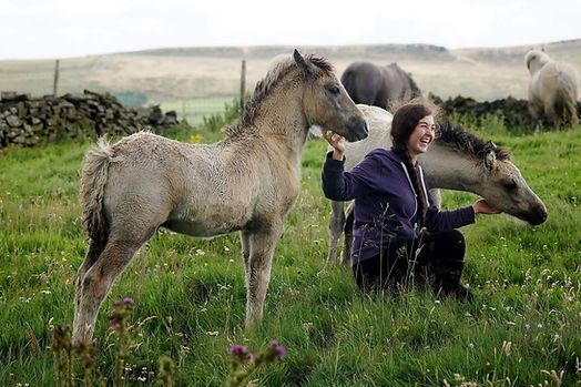 Heald Town highland pony stud contact page