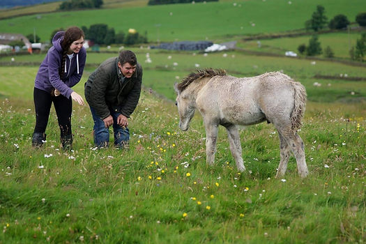 Heald Town Ponies - Highland Pony Stud
