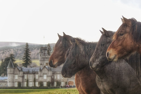 Balmoral Youngsters - Limited Edition Mounted Print