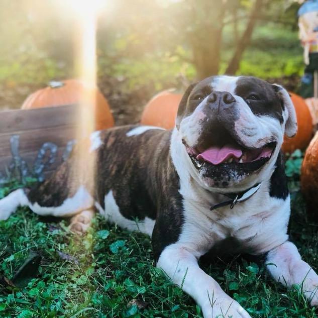 hen pumpkin.jpg