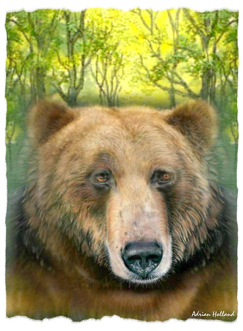 A3 Bear Framed Print