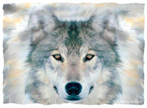 A3 Wolf Framed Print