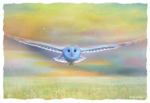A4 Owl Framed Print