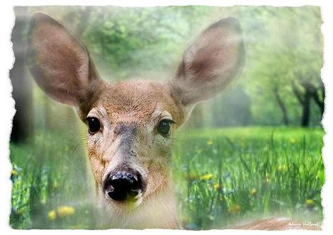 A4 Deer Framed Print