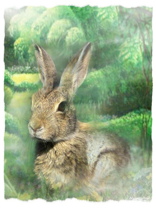 A3 Rabbit Framed Print