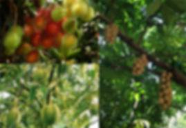 สวนผลไม้.jpg