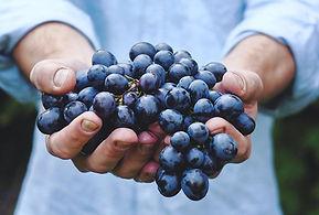 raisin-noir-mains_istock.jpg
