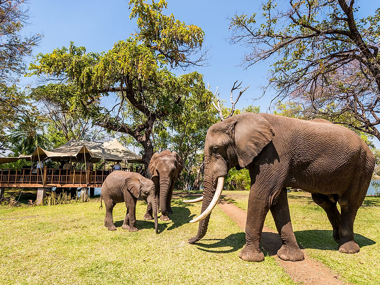 Lunch-Elephant-with.jpg