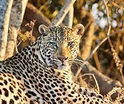 Zambia wildlife holidays Ntanda Ventures