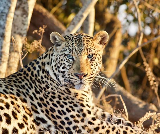 Zambia walking safaris zambia family safari  Ntanda Ventures