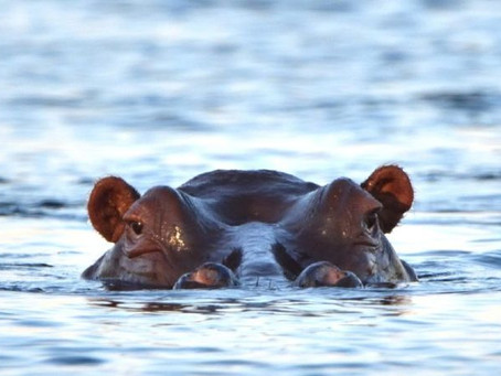 Wildlife Holidays – The Best of Zambia