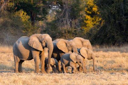 Family-of-Elephants-Ntanda-Ventures.jpg