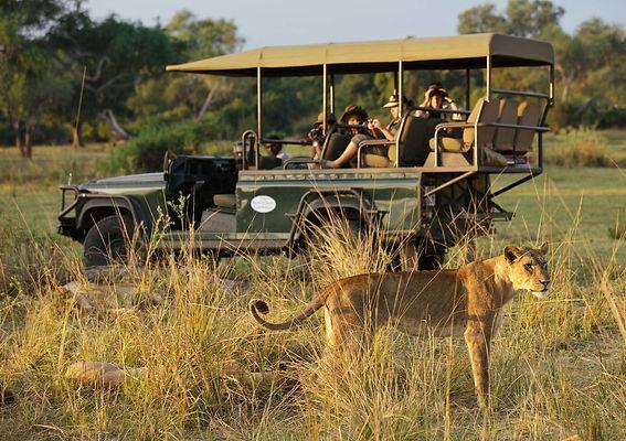 Lion spotted on Zambia family safari Ntanda Ventures