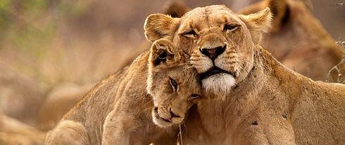 Lion-Cub-Ntanda-Ventures-3-1024x432.jpg