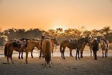 Zambia horse safari Ntanda Ventures