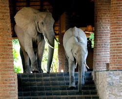 Zambia family safari Ntanda Ventures