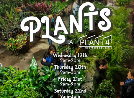 Plants at Plant 4 | 19th June - 23rd June