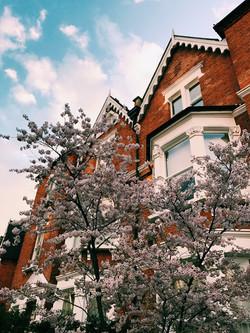Hampstead Heath House