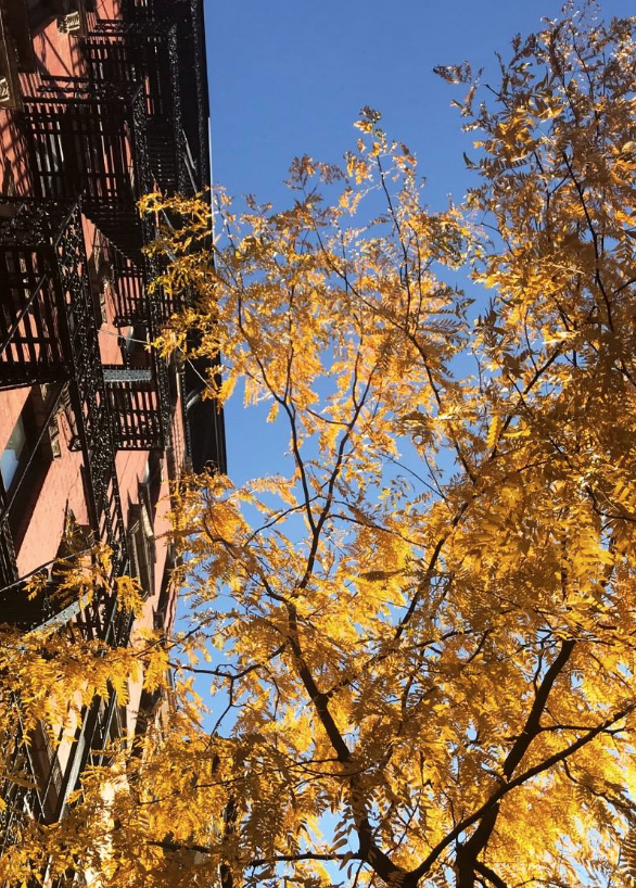 Fall on Ludlow Street