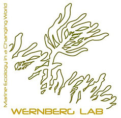 wernberglab-logo-brown-yellow.jpg