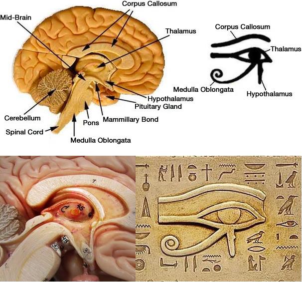 pineal_gland_eye_of_horus.jpg