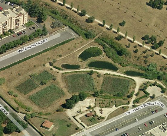 urban constructed wetland