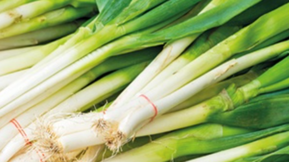 Spring Onions (£/bunch)