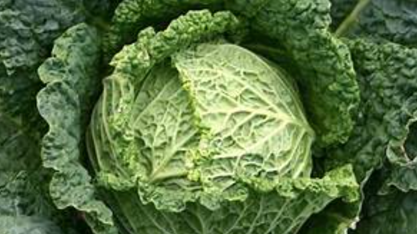 Cabbages Savoy (£/each)