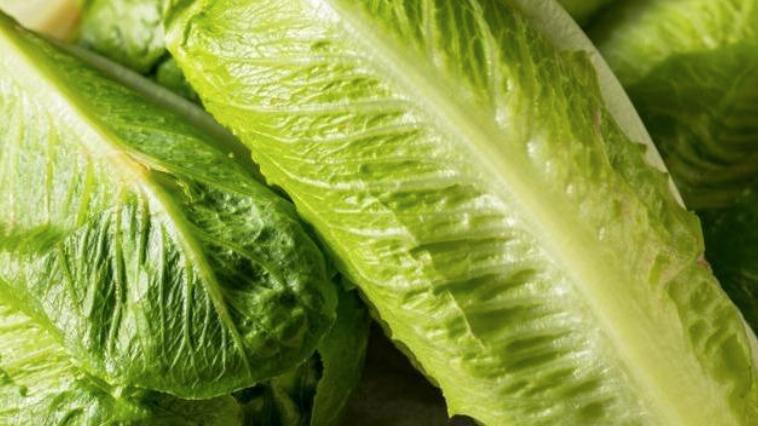 Romaine/Coz Lettuce (£/each)