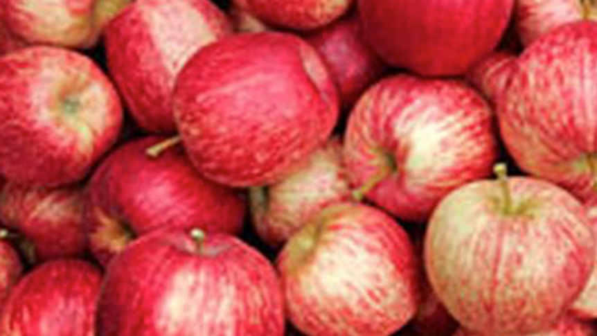 Royal Gala Apples (£/500g)