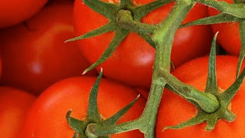Large Vine Tomatoes (£/500g)
