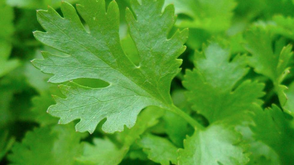 Flat Leaf Parsley (£/bunch)