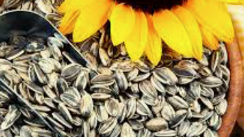 Dispensed Organic Sunflower Seeds (£/100g)