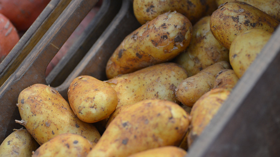 Jersey Royal Potatoes (£/500g)