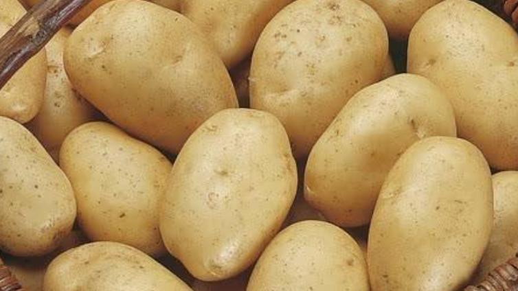 Wilja Potatoes (£/500g)