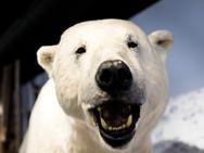 The Polar Bear Society