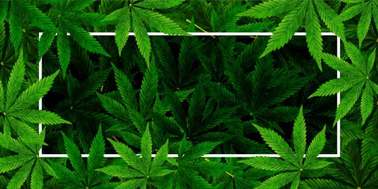 marijuana-cannabis-leaf-background-reali