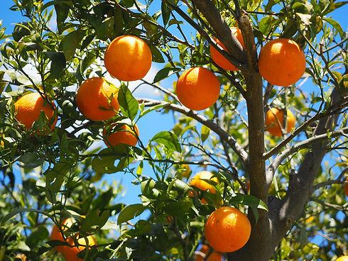 Beautiful Oranges from around the world