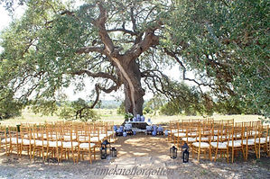 Outdoor Oak Tree Ceremony site: The Alexander at Creek Road