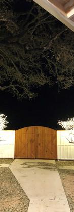 Glitteringtrees.jpg