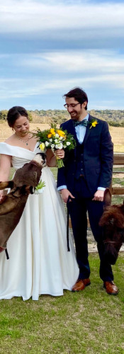 Drink Donkeys at Wedding: The Alexander at Creek Road